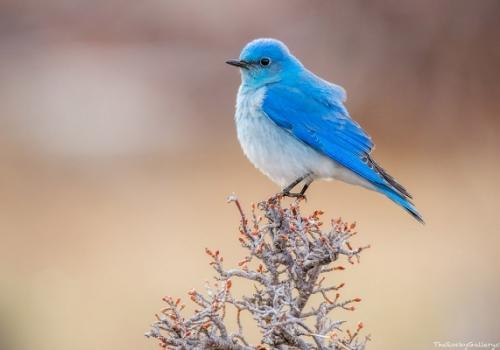 Ξεπουπουλιάστε το μπλε πουλί - Φιλοσοφίες για τον Ολυμπιακό